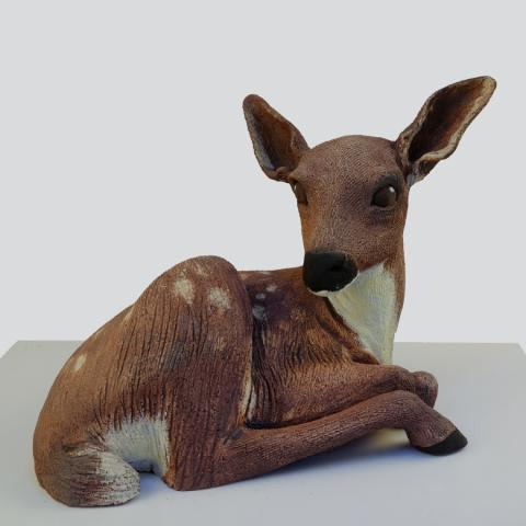 fallow deer image