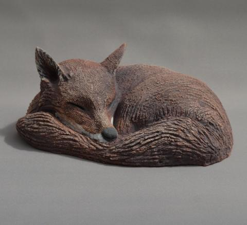 a curled fox