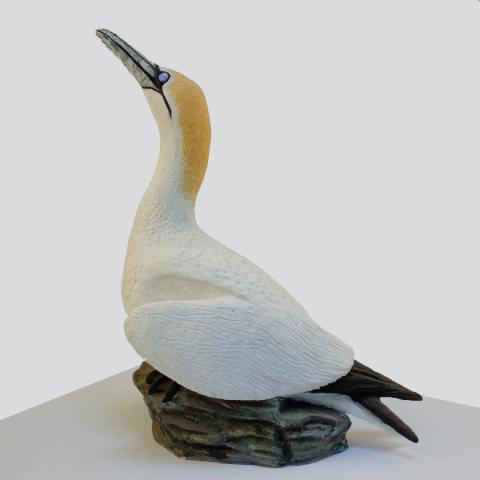 standing gannet
