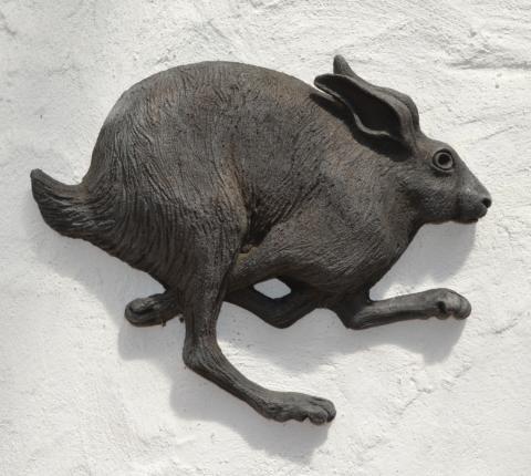 a hare running