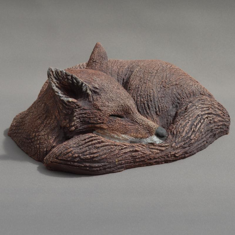 a curled fox