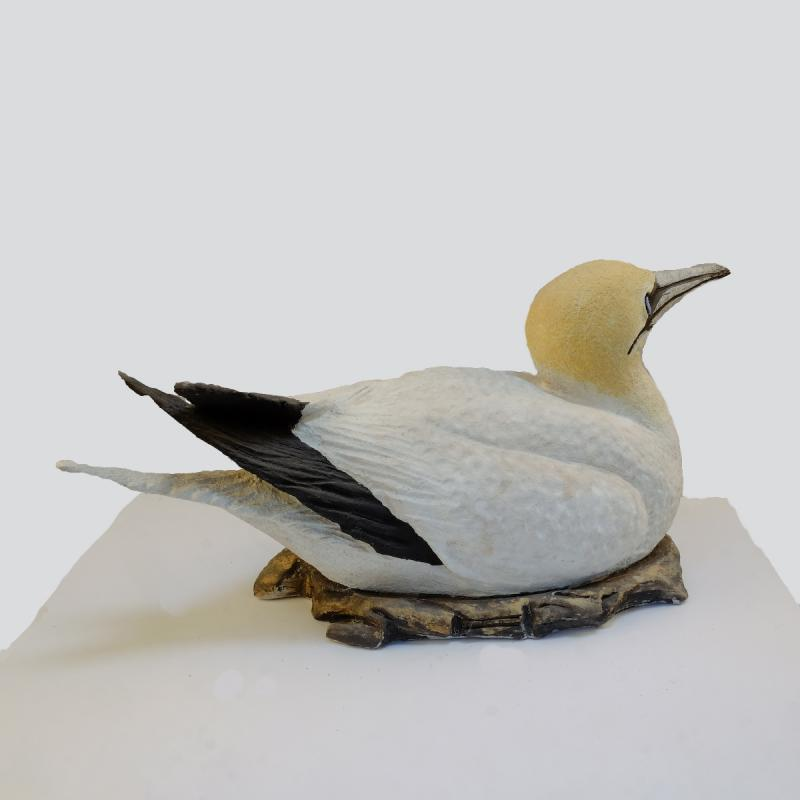 sitting gannet